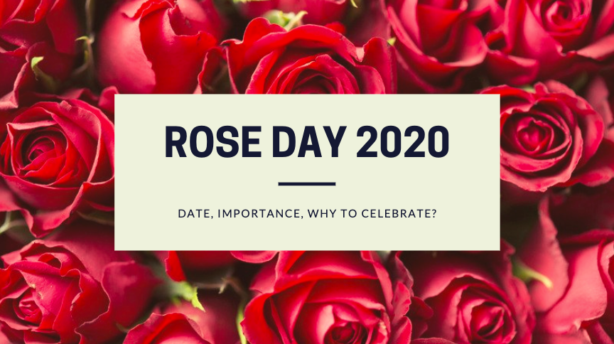 Rose Day 2020: Date, Importance, Why to celebrate?